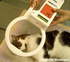 cypers kat gevonden utrecht