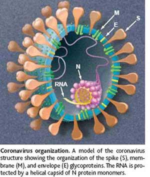Een plaatje van een Corona virus deeltje