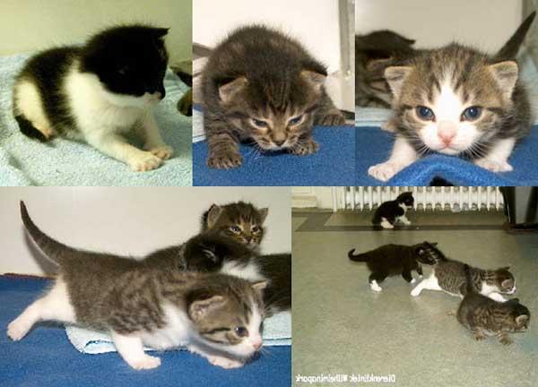 3f0d29e1bf Als een kitten geboren is  wat gebeurt er daarna