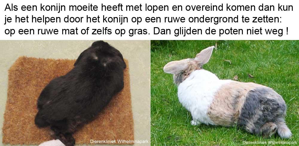 Een konijn met slappe achterhand kan steun vinden aan een ruwe ondergrond en daardoor veel beter lopen
