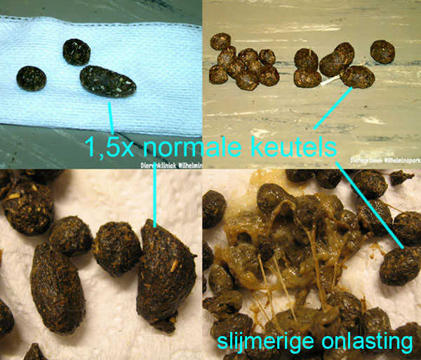 oorzaak wormen in ontlasting