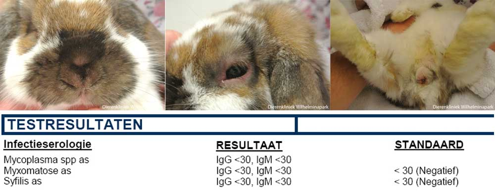 konijnen geluiden youtube