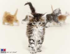Een website met informatie over kittens gemaakt door Hill's Pet Nutrition