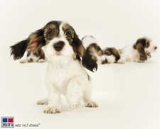 Een website met informatie over puppy's gemaakt door Hill's Pet Nutrition